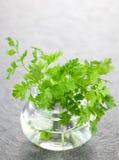 świerząbka szkło Fotografia Stock