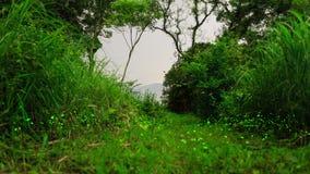 Świetliki lata wokoło w lesie Fotografia Stock