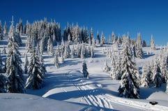 świetlistości zimno obrazy stock