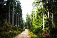Świetny ranek Las w Bavaria Na szczycie górskim wysokie drzewa Nieobecność ludzie absolutna cisza zdjęcie stock
