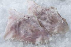 Świezi łyżwy ryba skrzydła Obraz Royalty Free