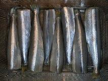 Świezi ścierwa mała ryba, obrany i przygotowany dla gotować zdjęcia stock