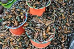 Świezi ślimaczków rolnicy targowy Chiapas, Meksyk zdjęcia stock