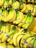 Świezi żółci Chiquita banany Obraz Stock