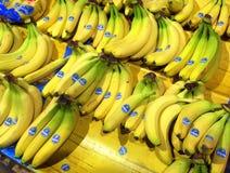 Świezi żółci Chiquita banany Zdjęcie Stock