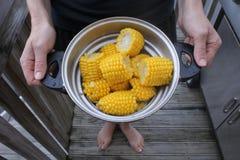 Świezi żółci słodcy kukurydzani cobs Obrazy Royalty Free