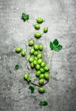 Świezi agresty z liśćmi Na kamienia stole Zdjęcie Stock