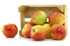 Świezi Braeburn jabłka obrazy royalty free