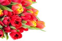 świezi bukietów tulipany zdjęcie royalty free