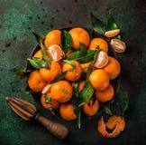 Świezi clementines tangerines z liśćmi na zmroku greeen backgr zdjęcia royalty free