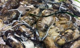 Świezi cuttlefish przy rynkiem w Włochy Obraz Stock
