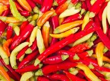 Świezi czerwieni i zieleni chili pieprze Fotografia Stock