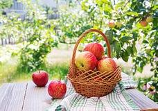 Świezi czerwoni jabłka w koszu na stole obraz royalty free