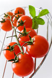 Świezi czerwoni pomidory z basilu liściem Zdjęcie Royalty Free