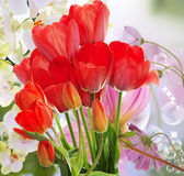Świezi czerwoni tulipany i kwiaty storczykowi Fotografia Stock