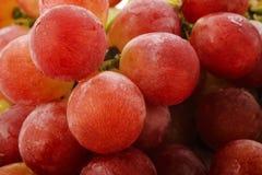 Świezi czerwoni winogrona odizolowywający na białym tle Obrazy Stock
