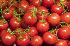 Świezi dojrzali czereśniowi pomidory Zdjęcia Royalty Free