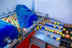 Świezi dojrzali jabłka stacza się na nowożytnym automatycznym mechanicznym cl obrazy royalty free