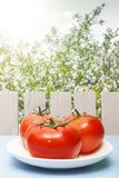 Świezi dojrzali pomidory na drewnianym stole na tle natura i kosmos kopii Organicznie warzywa dla zdrowego śniadania dalej lub go Fotografia Royalty Free