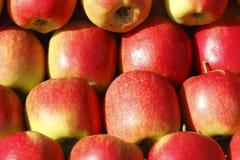Świezi jabłka na Wprowadzać na rynek kram Fotografia Royalty Free