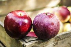 Świezi jabłka w klatce piersiowej zdjęcia stock