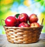 Świezi jabłka w koszu zdjęcia royalty free