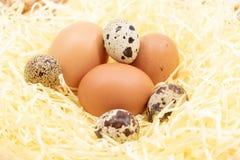 Świezi jajka na gospodarstwie rolnym w słomie - kurczaka jajko i przepiórki jajko obrazy royalty free