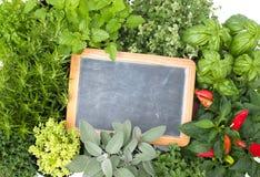 Świezi kuchenni ziele Zdjęcie Stock