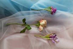 Świezi kwiaty na tkaniny błękita menchiach Zdjęcie Stock