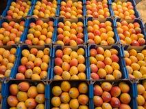 Świezi mango w pudełkach Obrazy Royalty Free
