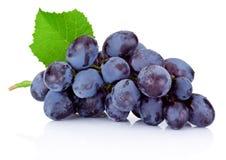 Świezi mokrzy błękitni winogrona z zielonym liściem odizolowywającym na białym backgrou Obrazy Stock