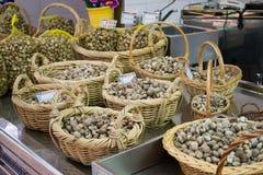 świezi mussels Zdjęcie Royalty Free