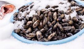 Świezi mussels zakrywający z lodem Obrazy Royalty Free