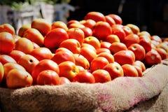 Świezi n gorący Czerwoni pomidory Fotografia Royalty Free