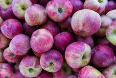 Świezi organicznie czerwoni jabłka w wielkim drewnianym pudełku, zakończenie w górę, tło obraz stock