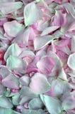 Świezi płatki wzrastali kwiat światła playnig tło Fotografia Royalty Free