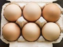 świezi pudełkowaci jajka Obrazy Stock