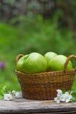 Świezi słodcy soczyści zieleni jabłka z kwiatami drewnianymi Obraz Stock