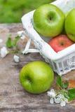 Świezi słodcy soczyści zieleni jabłka z kwiatami drewnianymi Obrazy Stock