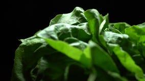 Świezi sałaty sałatki liście zbiory
