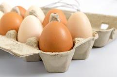 Świezi surowi kurczaków jajka w kartonu pudełku na białym tle, Zdjęcie Royalty Free