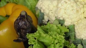 Świezi Surowi Organicznie Asortowani warzywa: Zucchini, Sałatkowi liście, kalafior, oberżyna, Dzwonkowy pieprz zbiory