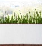 Świezi szczypiorki w garnku blisko okno Zdjęcie Stock
