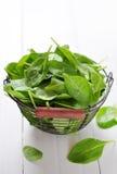 Świezi szpinaków liście zdjęcie stock