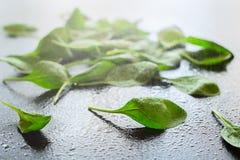 Świezi szpinaków liście na szarym tle Obrazy Royalty Free