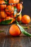 Świezi tangerine clementines z liśćmi na ciemnym drewnianym tle zdjęcie royalty free