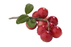świezi wiązek cranberries Obrazy Royalty Free
