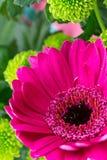 Świezi wibrujący jaskrawy coloured kwiaciarnia kwiaty Obrazy Royalty Free