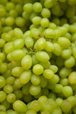 świezi winogrona Obrazy Stock