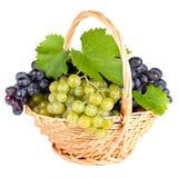 Świezi winogrona Zdjęcie Royalty Free